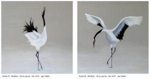 Cranes by Igor Sator